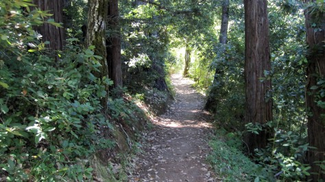 The magnificent trails of Huddart Park near Woodside, CA.